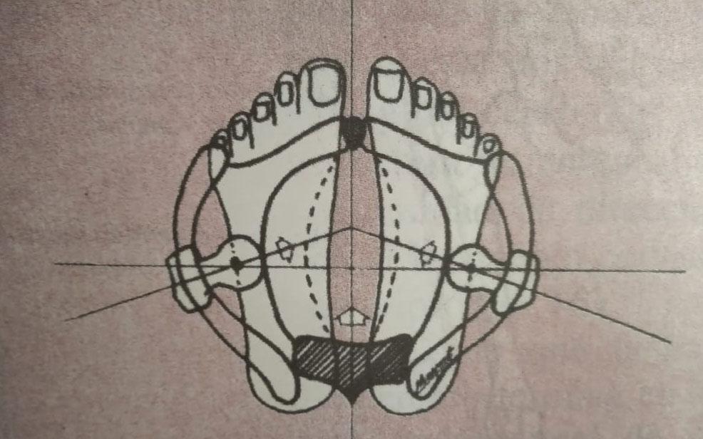 Aportes de la Eutonía para la Práctica de Yoga